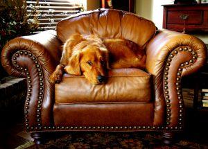 Gold Coast Upholstery